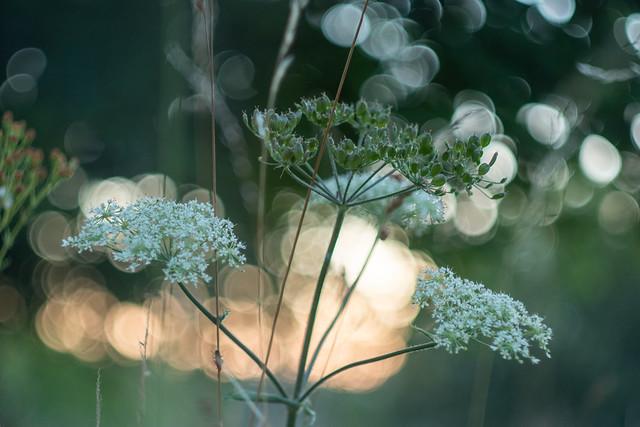 Avondimpressie uit verwilderde tuin