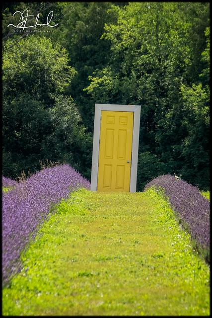 path to the yellow door
