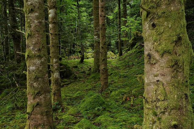 Forêt d' Issaux