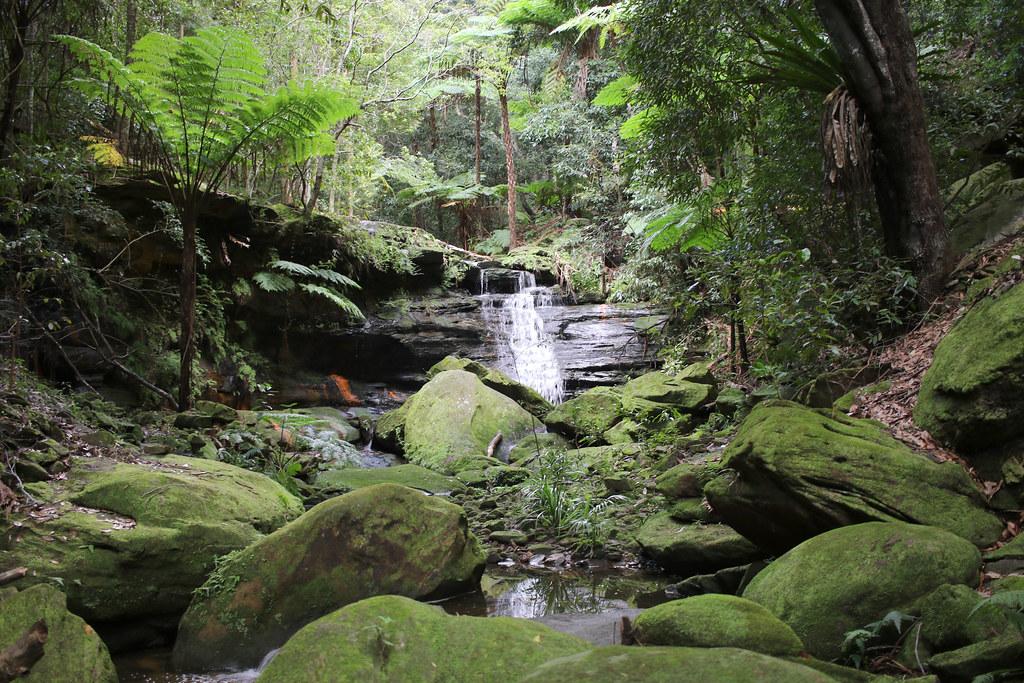 Waterfall with Straw Tree Fern (Sphaeropteris cooperi)