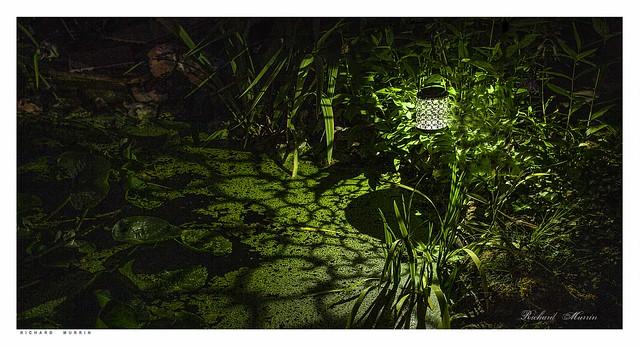 Night light by the pond.