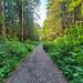 Monte Cristo Trail