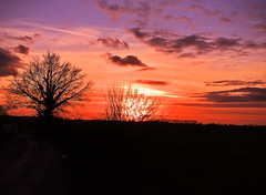 'Sunset Through the Trees'  Kent countryside.