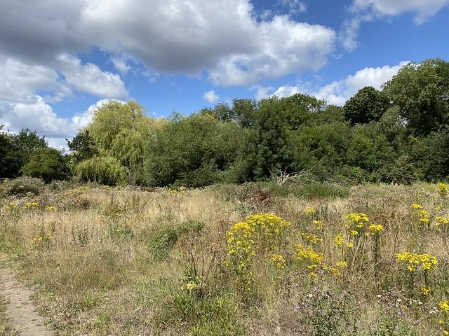 our favourite bit of scrubland, Beckenham