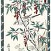 Heavenly bamboo, bunchflower daffodil and brown-eared bulbul
