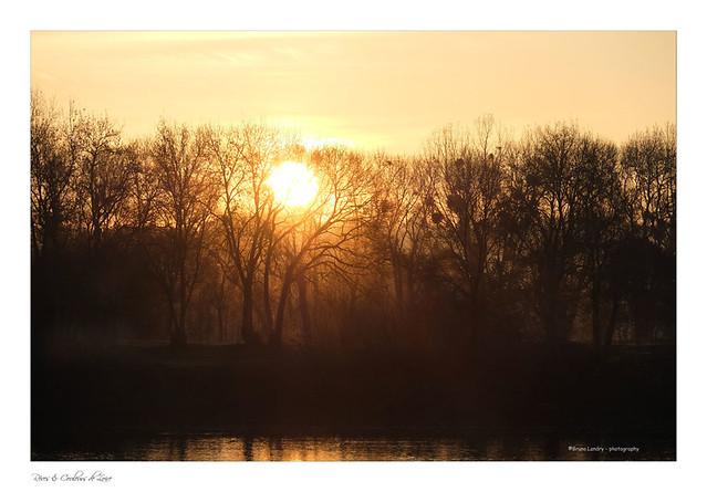 soleil levant entre loire et branchages