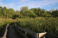 Visit with Runyon to North Bay Park (Ypsilanti Township, Michigan) - August 1st, 2020
