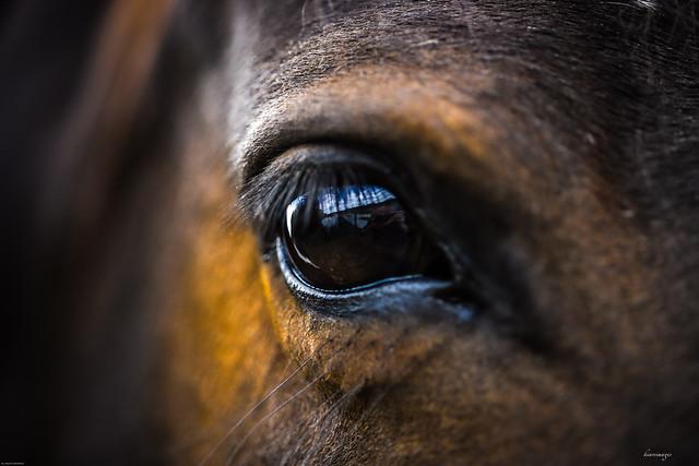 Ma ché cà...cosa fà sto scemo!...il cavallo che parla all'uomo