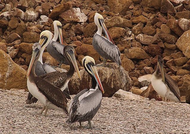 Paracas - Prov. Pisco Dip. Ica Perù