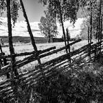 Björkberget, Siljansnäs, July 9, 2020