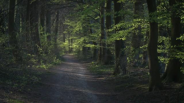 Walk in the fresh green