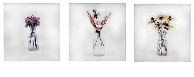 Northwoods Wildflower Tryptych