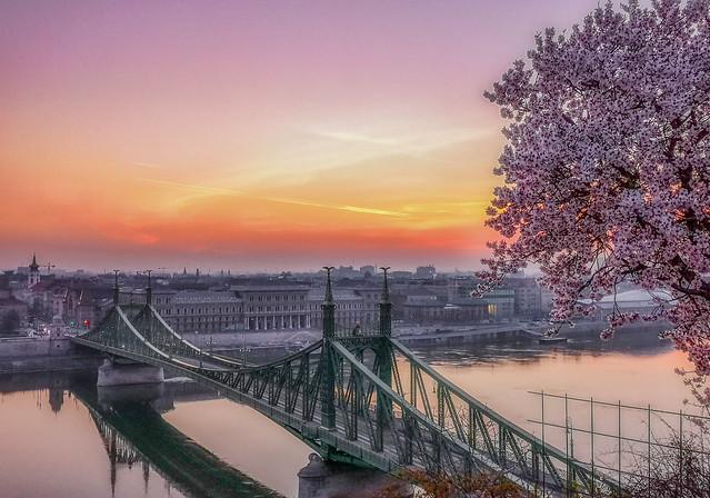 Budapest / Liberty bridge spring panorama