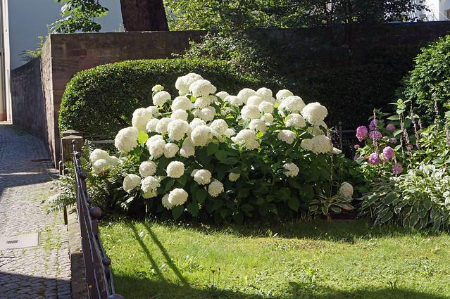 2020-07-21 158; Deutschlandtour; Fulda, Blumen