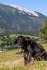 my ageing companion Viktor the dog <3
