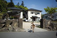 Miyajima, April 2016 #latergram #RicohGR #deer