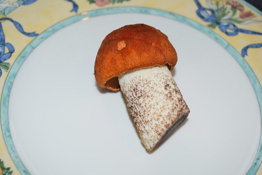 Помогите определить гриб DSC_0767