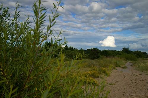 daugavgrīva rīga latvia riga latvija lettland nature landscape clouds summer white blue green sand stones bush grass flowers forest nikon d3200 1200 2400 mm f40 irina galitskaya galterrashulc