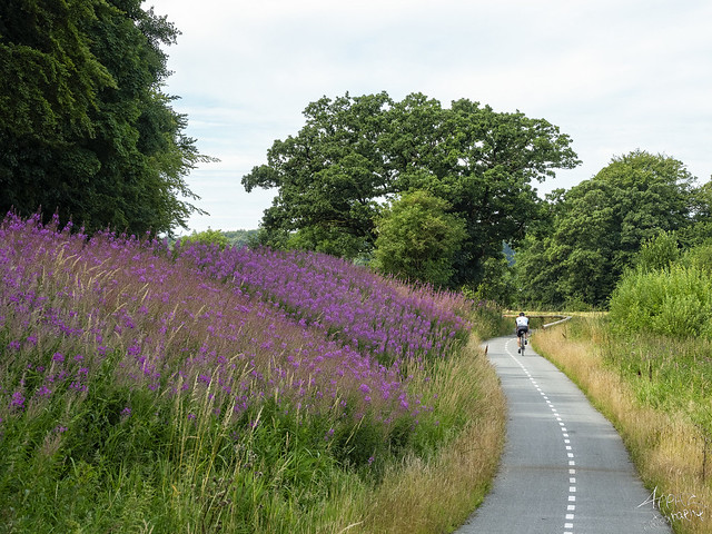 The cycle path, Mollerup 2020