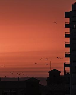 Migración vespertina