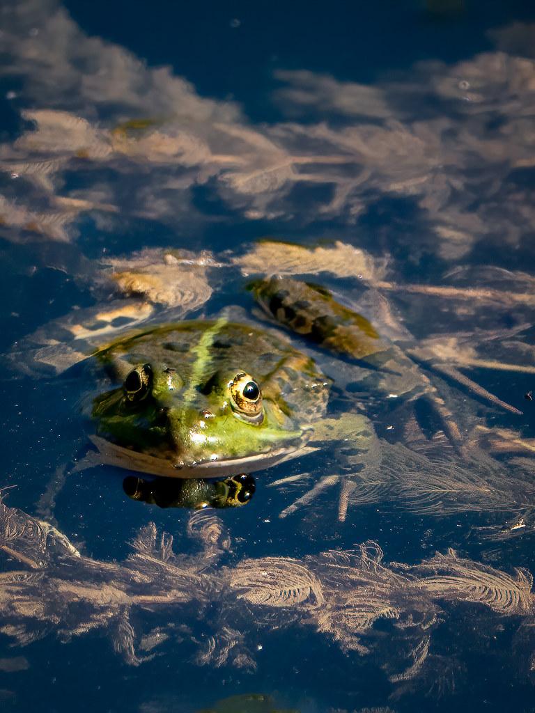 Face à face sur l'étang... 50181161687_ac49cac1f1_b
