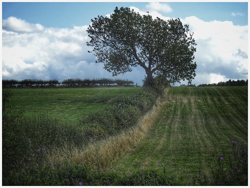 tree land farmland agriculture fields hedgerow sky skywatching clouds cloud landscape nature naturephotography naturelovers natureseekers naturalwonders imageof image imagecapture scunthorpe bottesford lincolnshire northlincs northlincolnshire nlincs photography photoof nikon