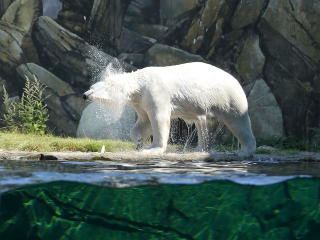 Zoo Rostock