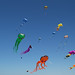 Colorful Animal Kites with Different Shapes Flying at a Beach in Denmark