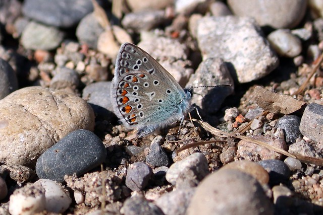 Stones with butterfly