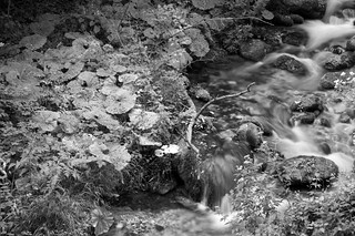 Forest stream at evening. Better viewed large.