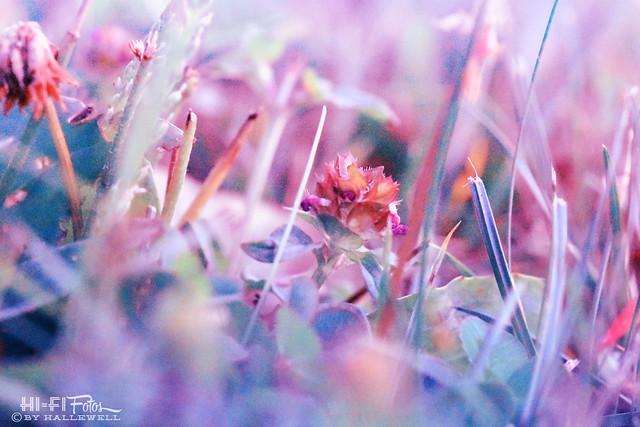 Jewel in the Underbrush