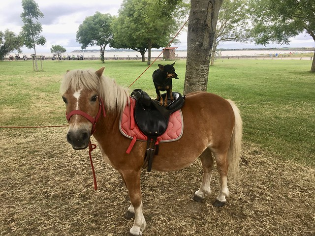 Max pose sur un poney