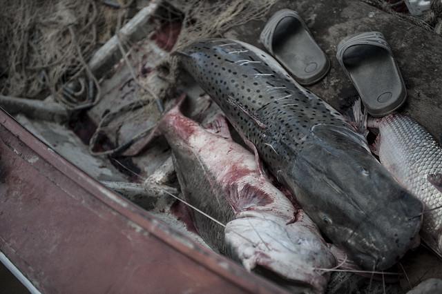 La pesca en la sangre - Silvio Moriconi