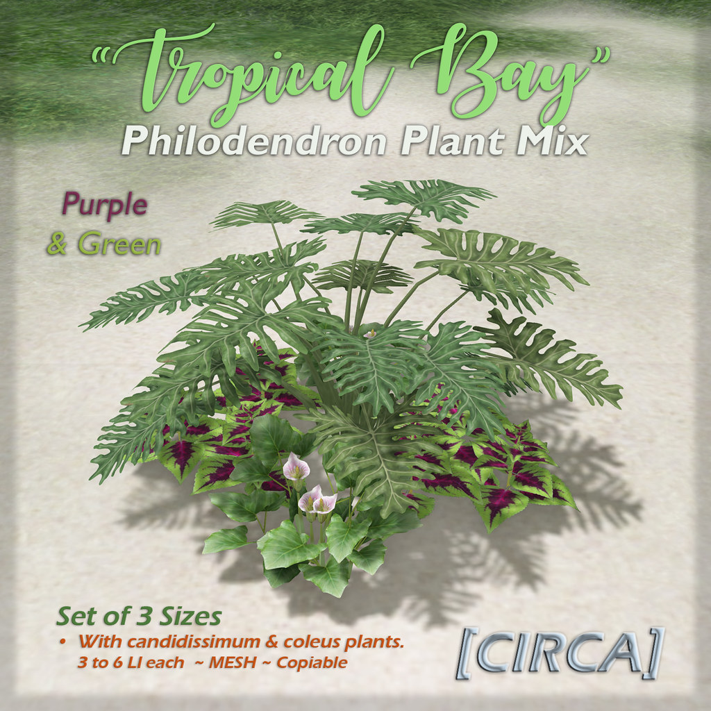 "SSS Event Item | [CIRCA] – ""Tropical Bay"" – Philodendron Plant Mix – Purple & Green"