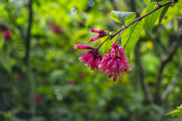 pink_flower_4