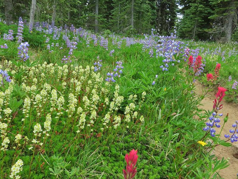Wildflowers along the Killen Creek Trail