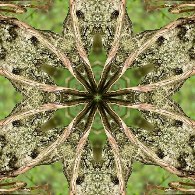 Kaleido Abstract 2475