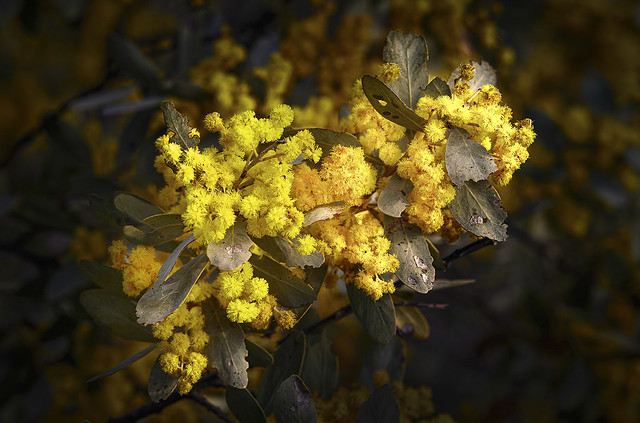 Australian Botanic Garden Mount Annan - Macarthur Region - NSW