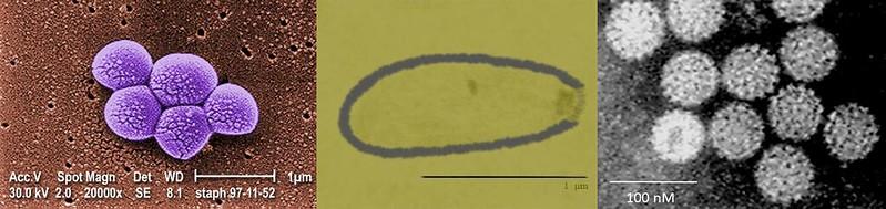 figure 2 virus