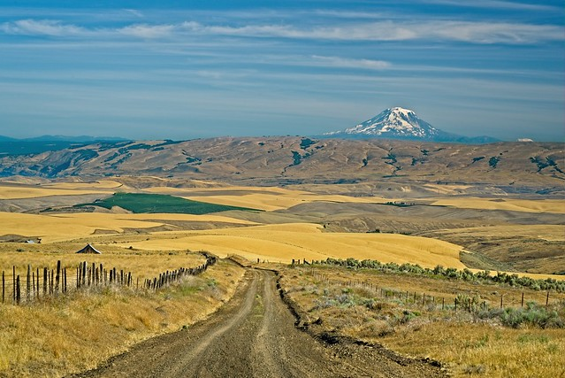 Dirt Road Wheatfields Mt Adams 901 A