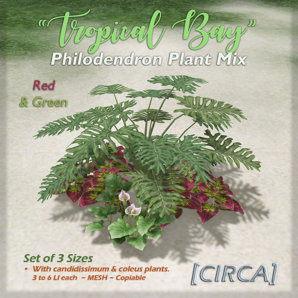 "SSS Event Item | [CIRCA] – ""Tropical Bay"" – Philodendron Plant Mix – Red & Green"