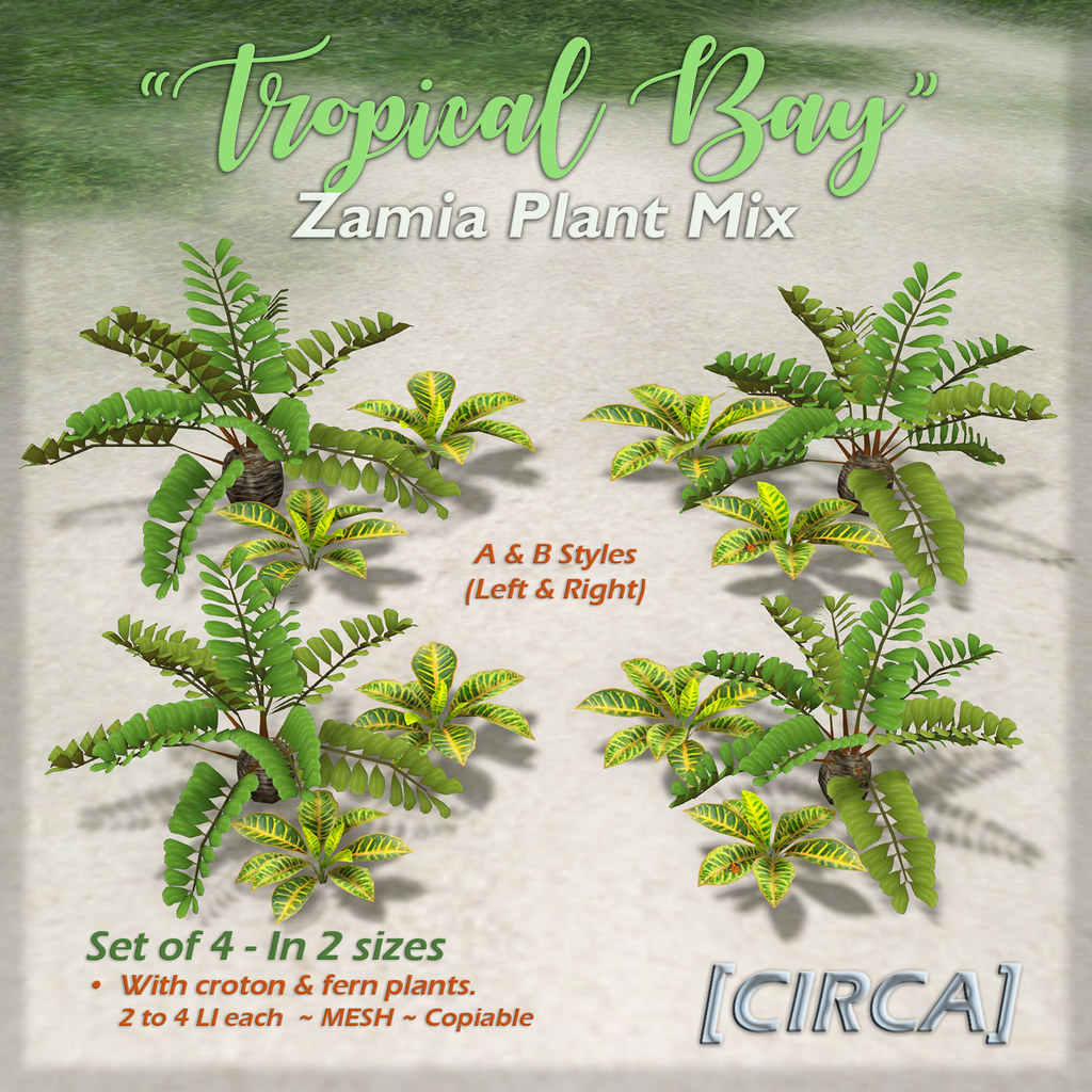 "SSS Event Item | [CIRCA] – ""Tropical Bay"" – Zambia Plant Mix"