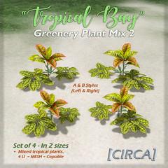 "SSS Event Item   [CIRCA] - ""Tropical Bay"" - Greenery Plant Mix Set 2"