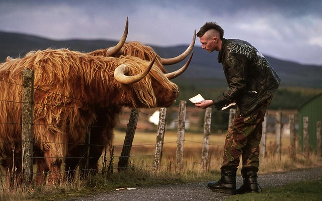 Scotland Fix of the Day: while we are shamelessly ogling Highland cattle it seems fitting to revisit Rusty and Tufty in Dalwhinnie. And to thank the young man who walked into my picture and fed them a loaf of bread. While I took the picture the three of t