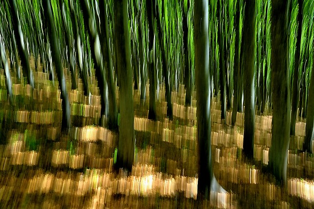 Italy, ghost wood
