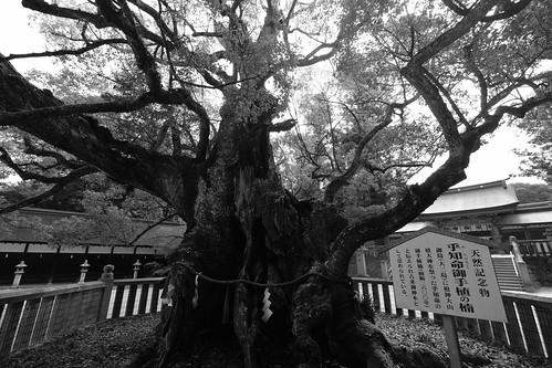 03-08-2020 on Omishima Island (10)