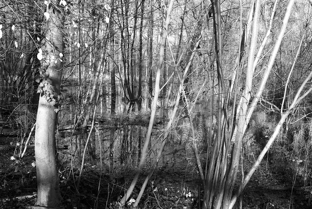 Water, trees.
