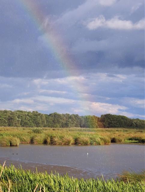 Raindrops and Rainbow at Druridge Ponds