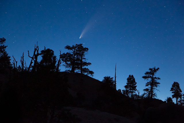 Comet Neowise Above the Trees