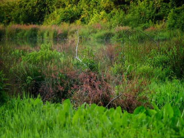 Pond fecundity